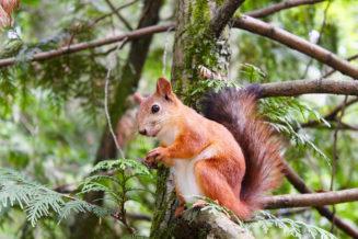 15 ciekawostek i mało znanych informacji o wiewiórkach